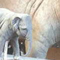 sculpture-enlargement-elephant-info-tmb